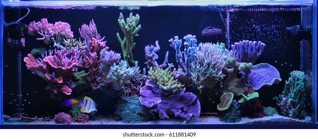 Dream Coral Reef Aquarium Tank