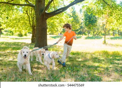 A dream of every child is to have a walk with these three beautiful dogs with soft fur. Redhead boy holds a dog-lead and looks after his pets.
