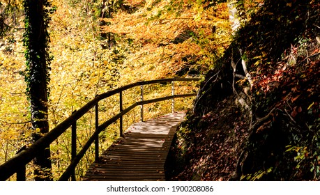 A dream forest in autumn, with autumn colors