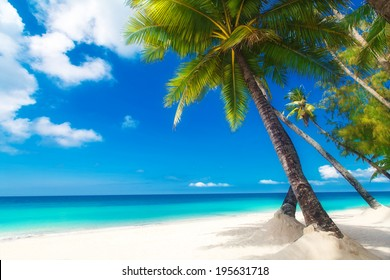 Dream scene. Beautiful palm tree over white sand beach. Summer nature view.
