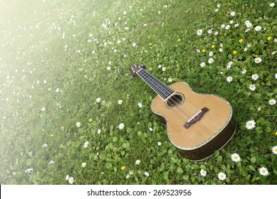 Dream Spring Ukulele. Acoustic ukulele on green grass among flowers in high spring.
