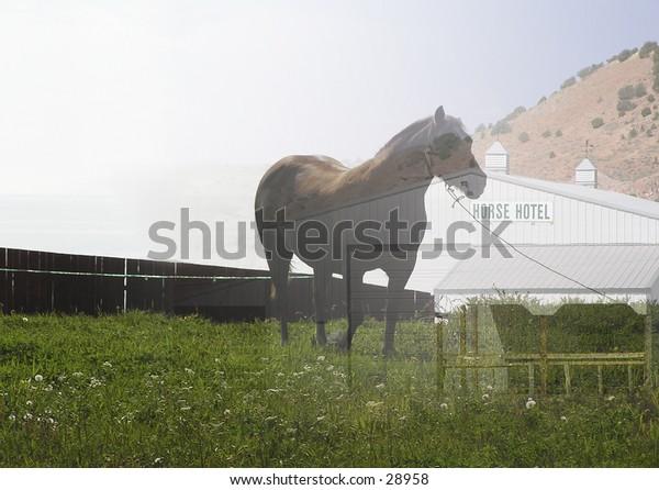"""Dream of Wyoming' horse -""""C'mon, let me sleep"""""""