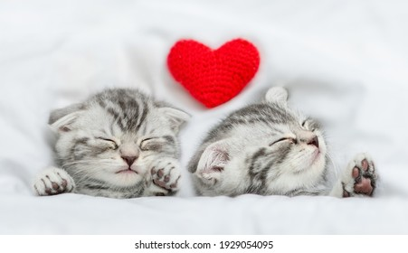 Dreaming kittens sleep with heart on a bed under warm white blanket. Valentines day concept. Top down view