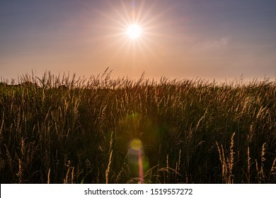Dreamlike evening sun over a meadow with lens flare in the foreground, Friesland, Germany