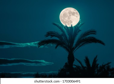 A dreamlike romantic night with a full moon over a beautiful palm tree. It seems that the palm with its fronds is gently catching the moon. A sight for romantic dreams.