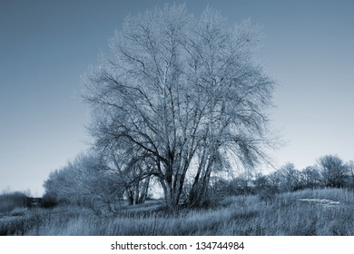 Dreamlike scenery representation with a tree in winter/Wintertree