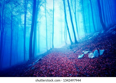 Dreamy blue colored foggy forest landscape with single path. Color filter effect used.