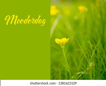 Dreamy buttercup image for Mothers Day with the Dutch word Moederdag for Mothers Day. A field of flowers with a solid text space.