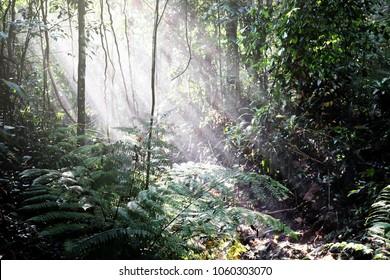 Dreamy crepuscular sunshine illuminating a green jungle floor.