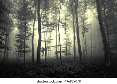 Dreamy dark yellow colored foggy forest tree background.