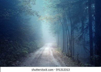 Dreamy evening autumn color foggy forest road. Scary dark blue green colored countryside woodland.