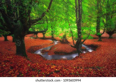 dreamy forest with a river