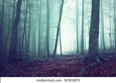 Dreamy green and blue foggy forest tree background. Fantasy colored woodland.
