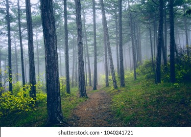 dreamy green forest on misty morning