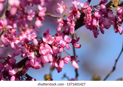 Dreamy image of a delicate pink tree flower in spring