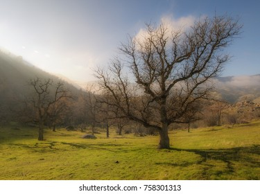 Dreamy landscape of beautiful green grass, oak trees, and a blue sky with puffy white clouds.