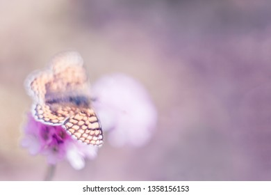 Dreamy living wildlife. Artistic unfocused image of spring nature with flower and butterfly on blurred purple background.