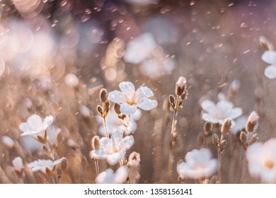 Dreamy nature background with grass, white flowers and water drops in sunlight. Soft focus artistic lens close-up macro. Spring concept