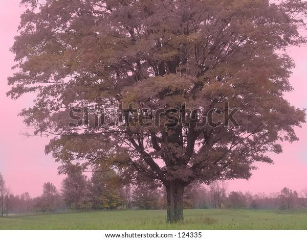 Dreamy pink hued tree in field