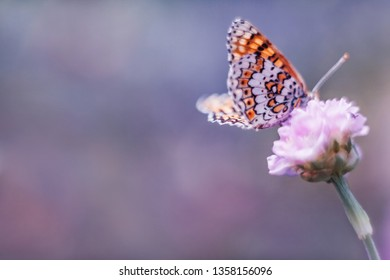 Dreamy romantic artistic image of spring nature with flower and butterfly on blurred background. Soft focus.