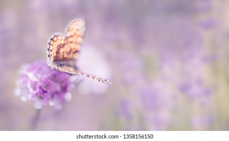 Dreamy romantic artistic unfocused image of wild nature with flower and butterfly on blurred background. Soft focus.