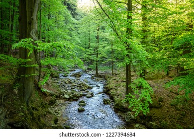 A dreamy stream in the middle of the green forest