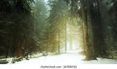Dreamy trail in foggy forest during winter