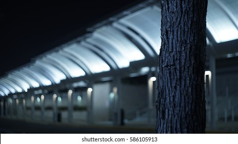 Dreamy winter nighttime cityscapes tree in front of building