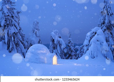 Dreamy winter scene with an igloo snow. Night view with snowy fir trees and snowdrift. Snowfall in a mountain forest