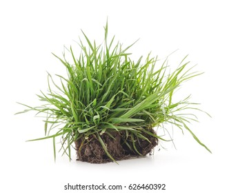 Dreen grass with roots on a white background.