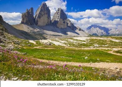 Drei Zinnen or Tre Cime di Lavaredo with beautiful flowering meadow, Sextener Dolomiten or Dolomiti di Sesto, South Tirol, Italian alps
