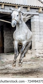 Dressage of a horse