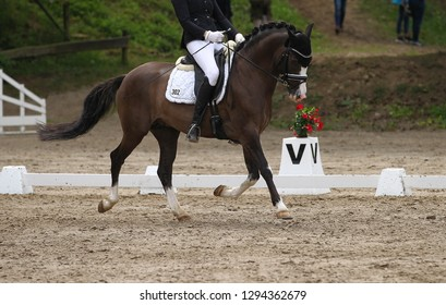 Dressage horse (pony) with rider in the dressage quadrangle, in the gait trot.