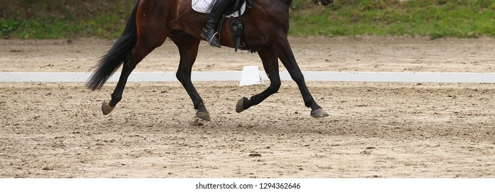 Dressage horse (pony) with rider in the dressage quadrilateral, in the gait trot, in the limbo phase.