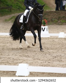 Dressage horse (pony) with rider in the dressage quadrilateral, in the Gait gallop, in the upward phase.