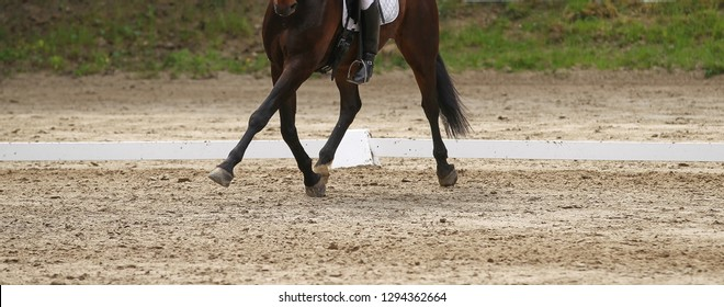 Dressage horse (pony) with rider in dressage square, in the gait trot, in the traverse in the turn.