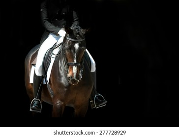 dressage horse portrait before start against black background