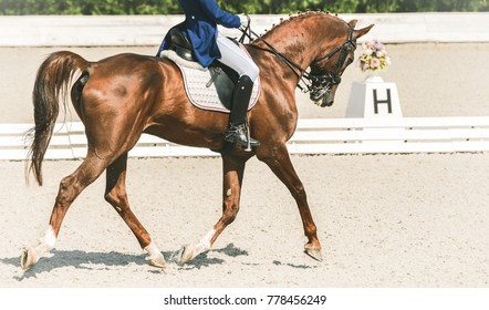 Dressage horse and rider in blue uniform. Sorrel horse portrait during dressage competition. Advanced dressage test. Copy space for your text.