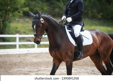 Dressage horse with rider in close-up during a lesson in a dressage tournament.