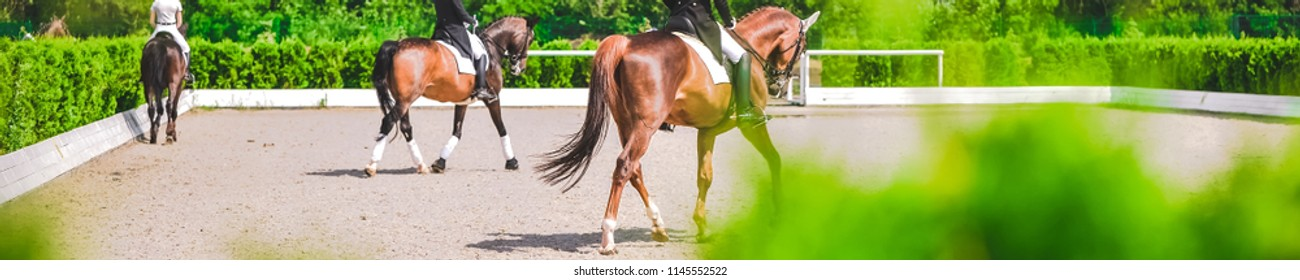 Dressage horse and rider in uniform during equestrian competition. Blur green trees as background. Horse horizontal banner for website header design.