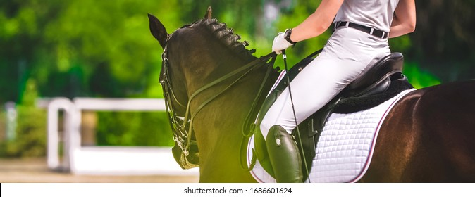 Dressage horse and rider in white uniform closeup. Horizontal banner for website header design. Equestrian sport competition, copy space.