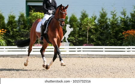 Dressage horse in the test, trot strengthening suspension phase.