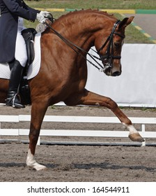 Dressage: portrait of bay horse on sports arena background