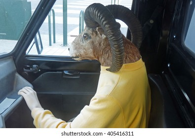 Dressed stuffed animal with human hand sitting in a car