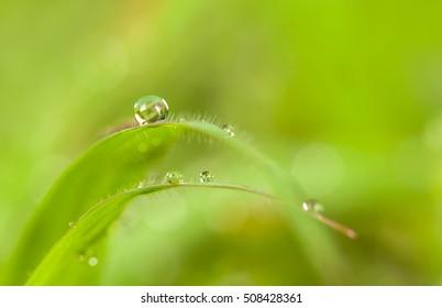 drew drop on green grass.