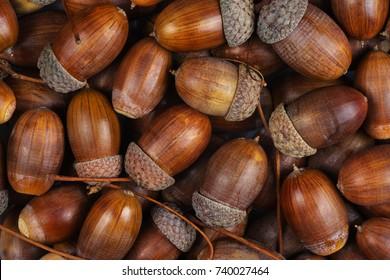 acorns images stock photos vectors shutterstock