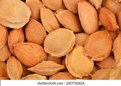 Dried apricot kernel, close up as background