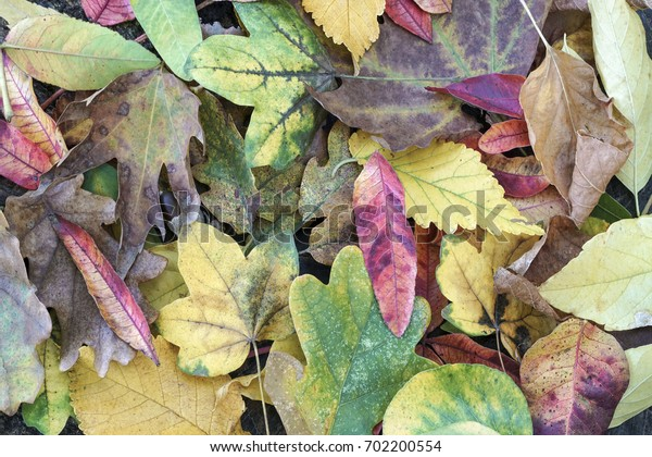 dried autumn leaves as a background