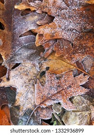 Dried autumn leaves, covered with hoarfrost lie on ground.  Winter season background.