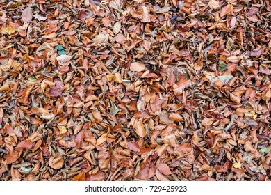 Dried autumn leaves scattered in the forest or park